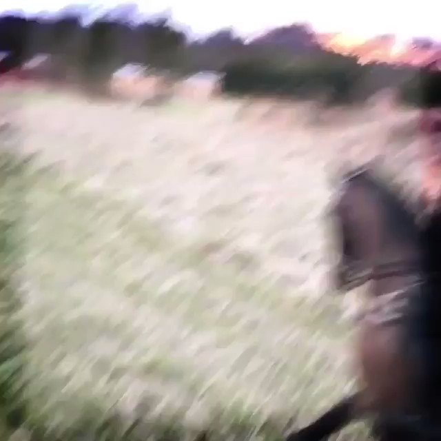 First Ride of 2019 in my beloved Ubertus..........So much Better Now! ???????????????????? #ride #horses #nature #live #life #2019 https://t.co/outO5WUfKU