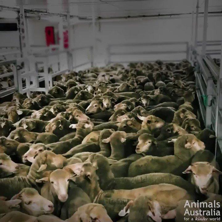 RT @MercyForAnimals: No animal deserves this. ???? https://t.co/lBzyHJEpdF