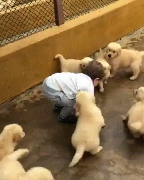 Surrender to the cuteness! ????❤️ #nationalpuppyday https://t.co/FeFFZPYHuB