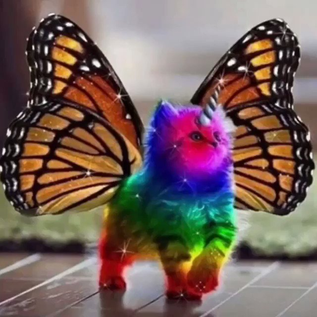 My Spirit Animal ???????????????????? https://t.co/IQfsUk3wMC