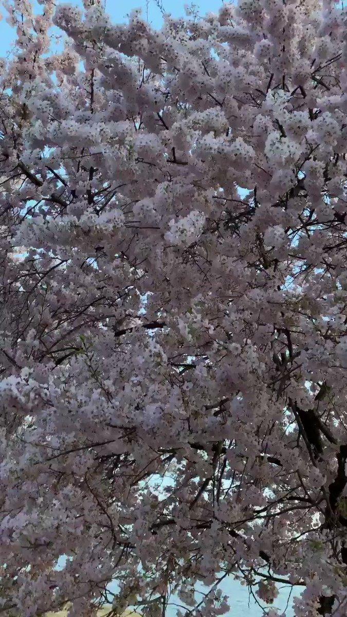 Spring has sprung! ???? https://t.co/WI0yl4EGxa