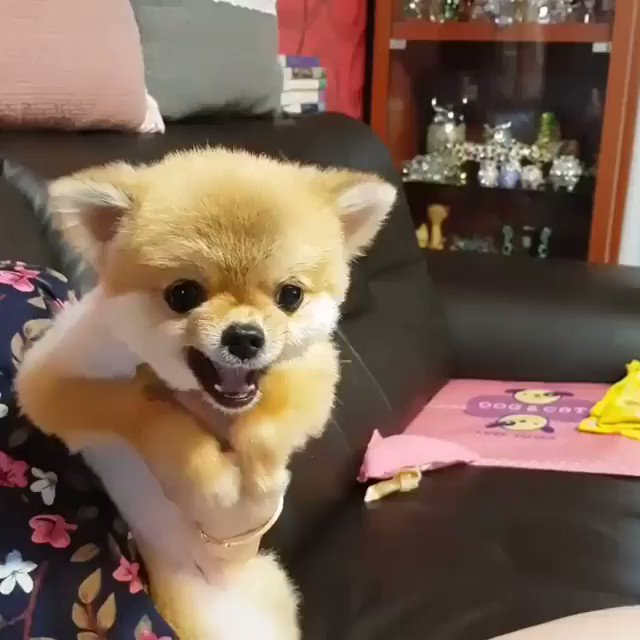 Even when you are angry you are adorable 😾😹 https://t.co/1yH3xl6gG3