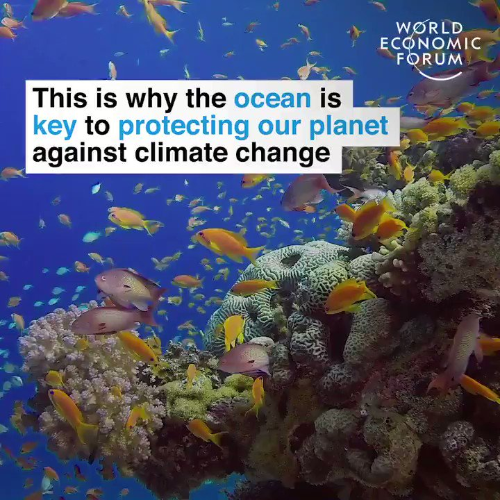 #DYK the #oceans are our best friends in our struggle with #climateChange?  They absorb much of excess heat trapped by greenhouse gases. We should give them more respect than as repositories for discarded plastics.  cc: @SDG2030 @ClimateKIC @Marco_vdRee @UNDPClimate @GaryLewisUN https://t.co/8paQFI0zn4