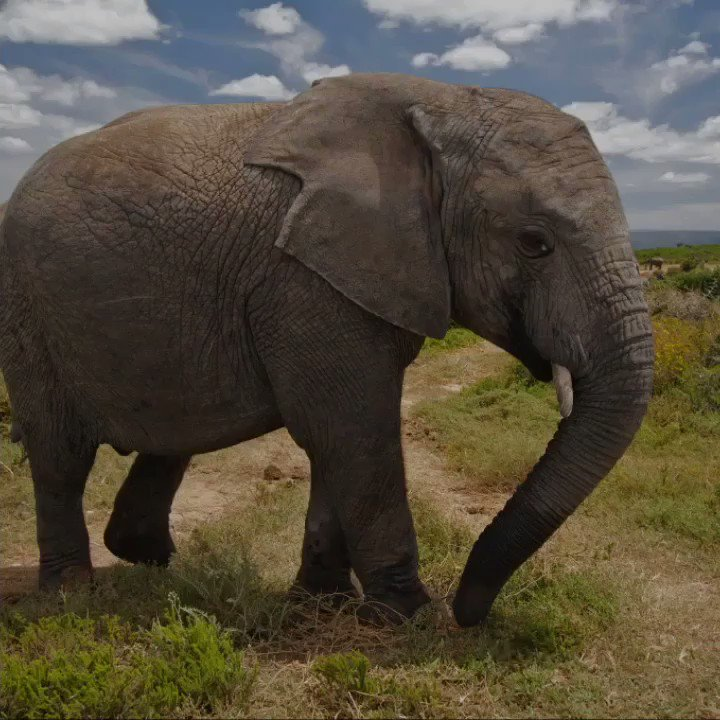 RT @RacingXtinction: Disappointing news out of #Botswana today for elephants ????. #racingextinction https://t.co/daIFE0wRoq