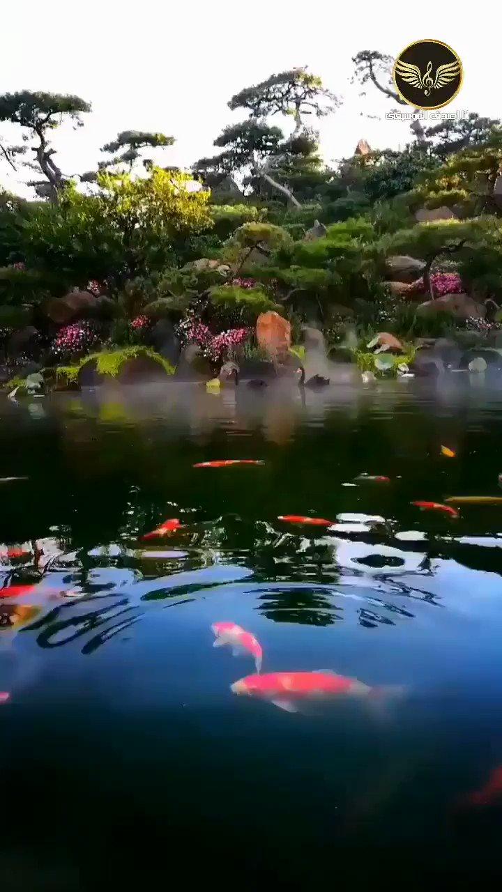 RT @Zohiraarab1: جمال المَكان #بمن رافقك فيه وجمال الوقت #بمن شاركك فيه😍♥️ The beauty of the place is #with the one who accompanies you 'and the beauty of the time is #with the one who shares it' #with you ♥ https://t.co/yzT8ZRMJpE