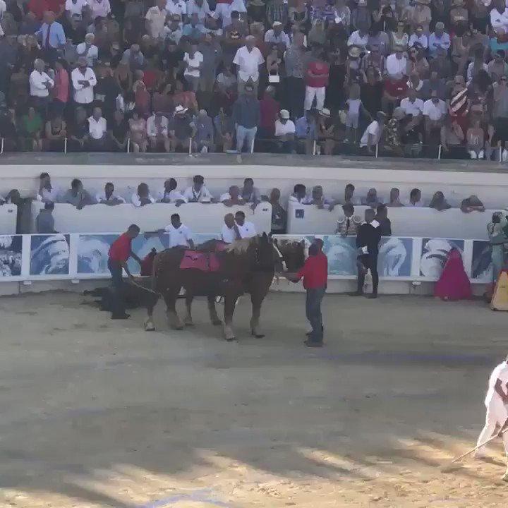 Le 15 août, nous étions à Béziers. Taureaux assassinés, trompettes, applaudissements : «un hymne à la vie» pour @RobertMenardFR, le maire de la ville. 📌 La corrida, une tradition approuvée et recommandée par le gouvernement français @dguillaume26