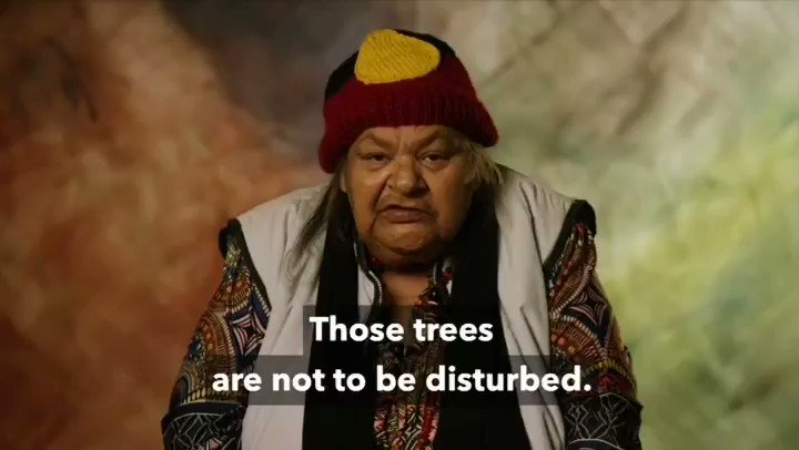 PROTECT SACRED LAND Stand with Djab Wurrung : This Wed 21st . Stand with Djab Wurrung people to prevent destriction of Sacred Birthing Trees https://t.co/vZKV6YbaML