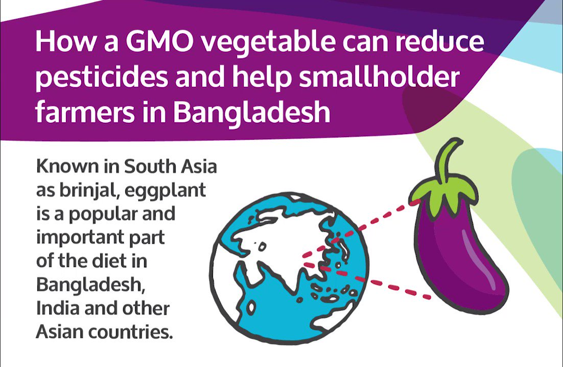 How genetically modified, pest-resistant Bt eggplant (brinjal) has helped smallholder farmers in Bangladesh greatly reduce their use of insecticides, while increasing their incomes six-fold. https://t.co/8w34QuszAz