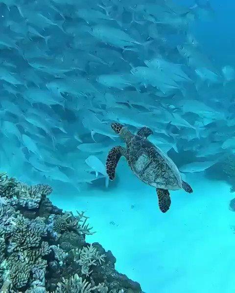 Tortuga 🐢 #Naturaleza #GranjeroVerde https://t.co/Z35ul4n1hS