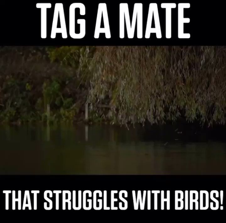 TAG A MATE......  @TheCARPbible  Credit - ➡️ @<b>Carpology</b> ⬅️ #Carp #CarpFishing #Fishin