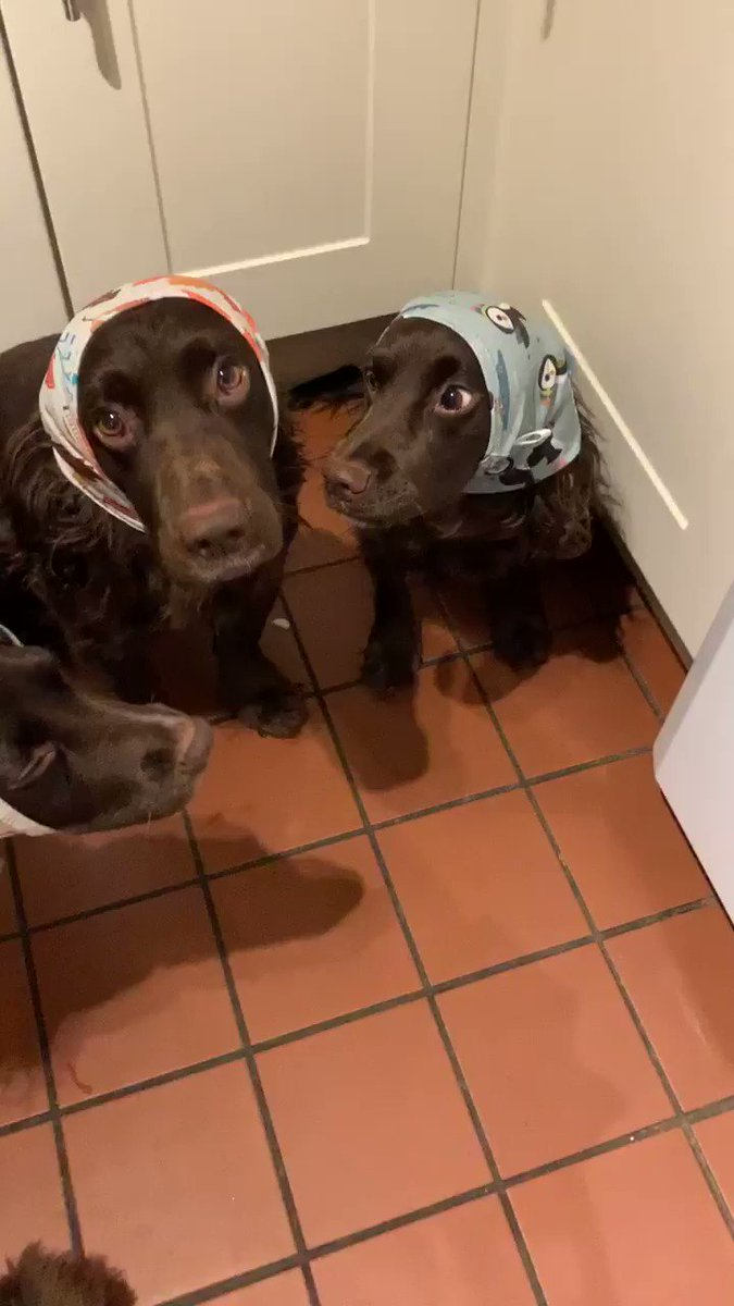 We now have snoods so no more manky ears after dinner 😝