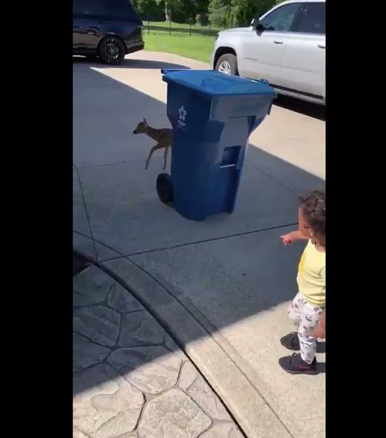 the world's an awful place but also have you seen this video of a tiny deer meeting a tiny human