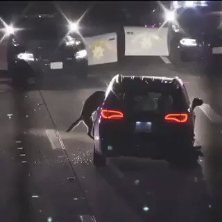 Great job by @SanDiegoPD K9 unit dog grabs on to a suspected car thief until police showed up to apprehend him, preventing the would-be car thief from escaping.