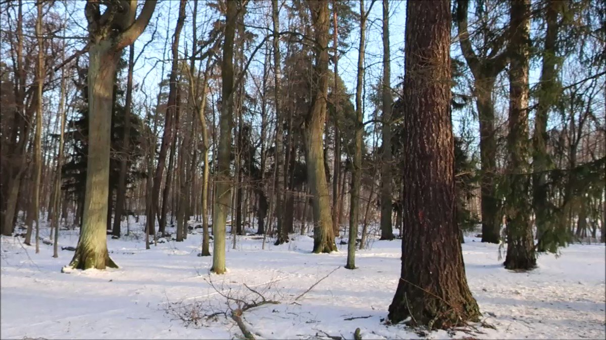 Greetings from #Finland! This is our daily #forest report with all the latest details about #raking.  #Suomi #nature #luonto #photography #RakeTheForest #haravointi #Trump #weather #MondayMotivation #thephotohour #VisitFinland #snowhour