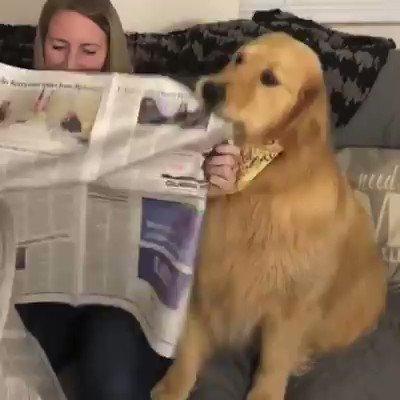 Fausses nouvelles, manipulation de l'information : comment lutter contre les #FakeNews ? - Adoptez un chien de détection spécialement dressé pour signaler la présence de fake news relayées par les #médias.
