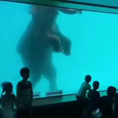 One of the Best elephant show video on Internet.