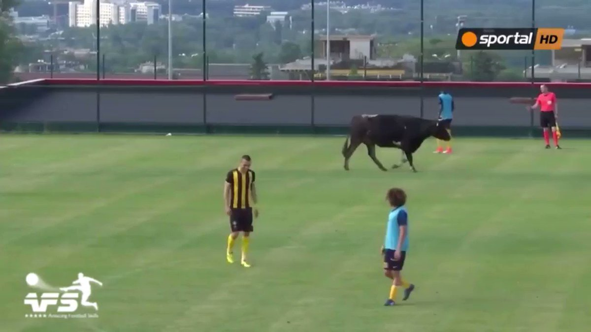 Cow and dog invade a soccer match