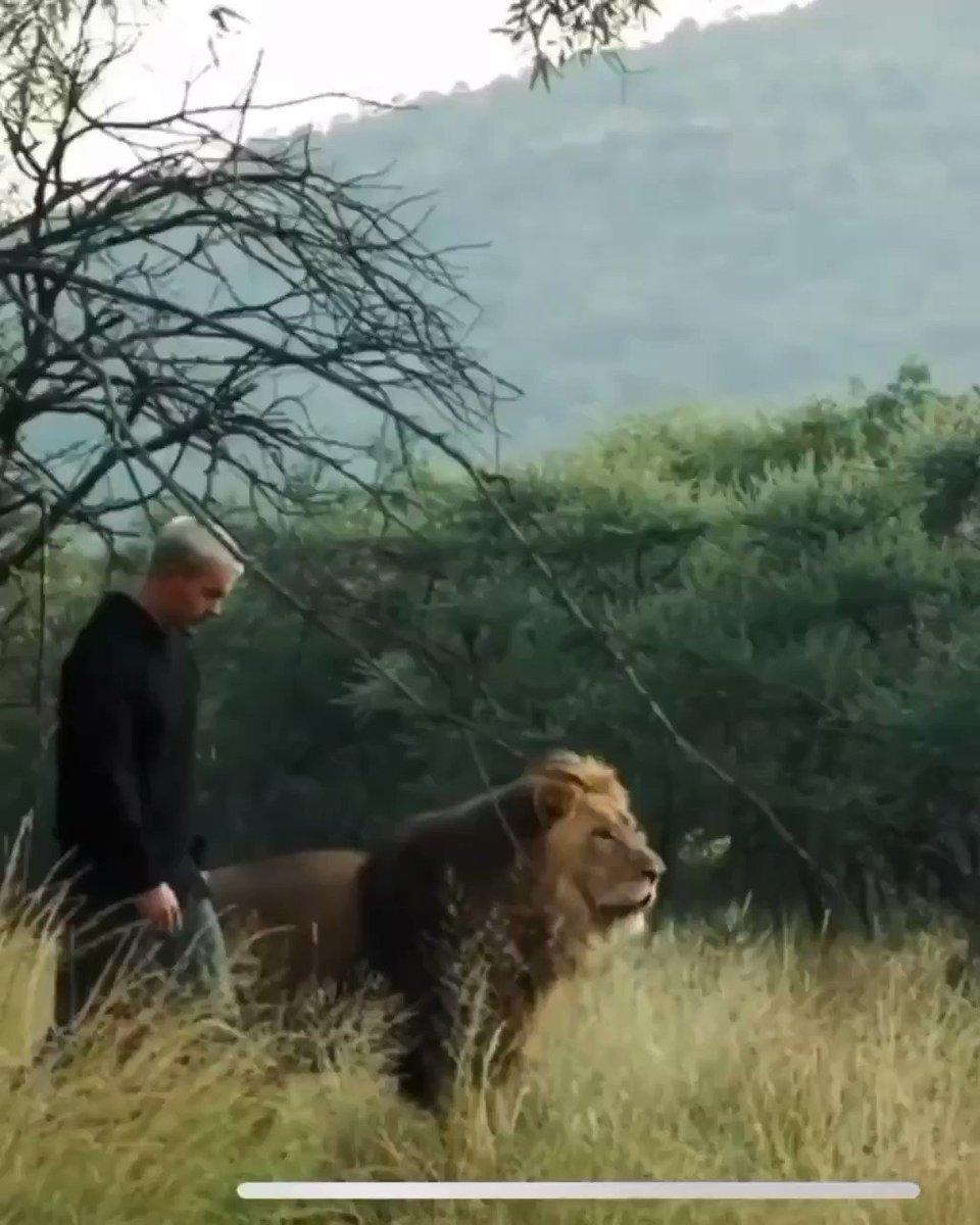 Son ami C'EST UN LION