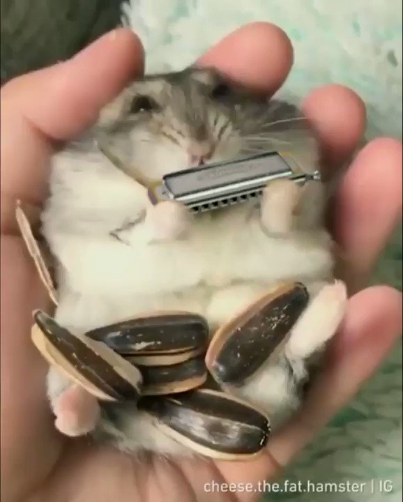 Have ya ever seen a blues playin' hamster? 🤣🎶🎶🎶