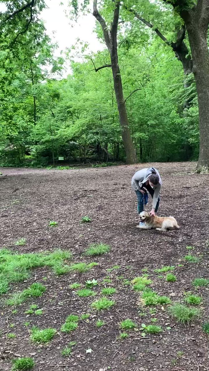 Oh, when Karens take a walk with their dogs off leash in the famous Bramble in NY's Central Park, where it is clearly posted on signs that dogs MUST be leashed at all times, and someone like my brother (an avid birder) politely asks her to put her dog on the leash.