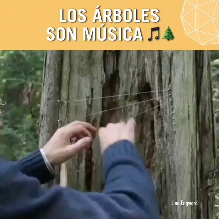 De esta manera, los árboles también crean música 🌳🔊🤗  #FelizMiercoles https://t.co/ewx8QennsQ