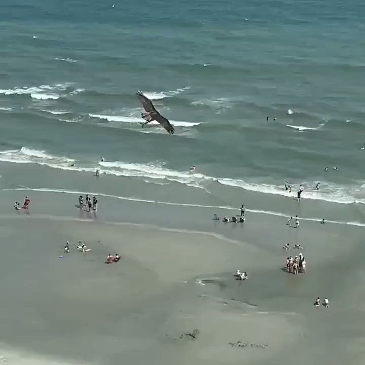 Just in case you haven't seen a bird flying around with a shark that it just plucked out of the ocean...