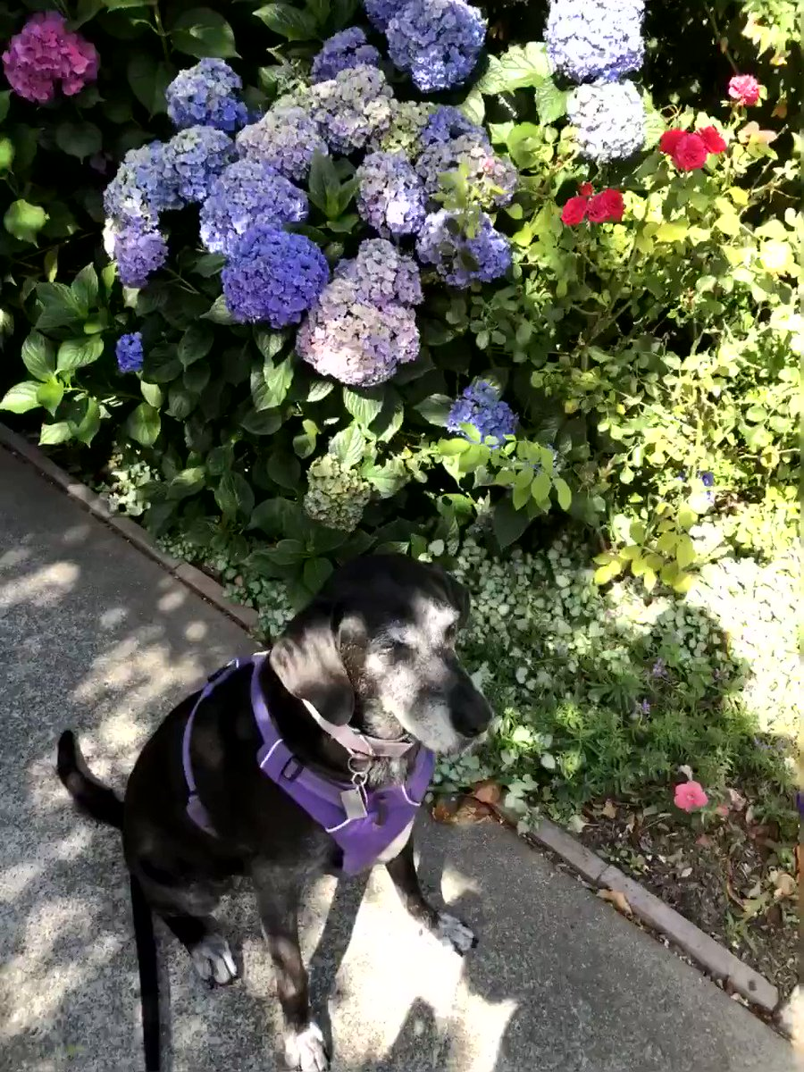 I slept in after a full day of celebrating. I just can't party like I used to.☺️ Thanks again for all the sweet wishes. I'll try to catch up with everyone today. Meanwhile, I hope you like these beautiful floofs!🐾
