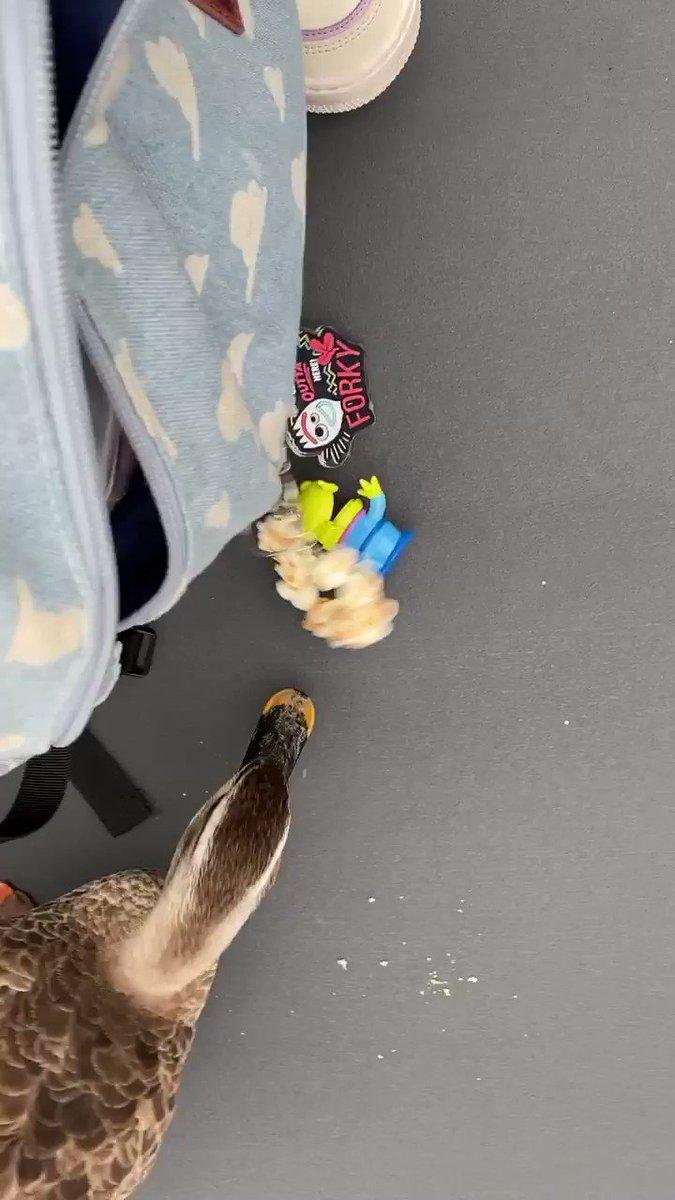 ディズニーの鴨がポップコーン見慣れすぎてるせいか、私のキーホルダーまで必死に食べようとしてた😂  #ディズニーランド #TDL_now #そんな私はディズニーの鴨💓