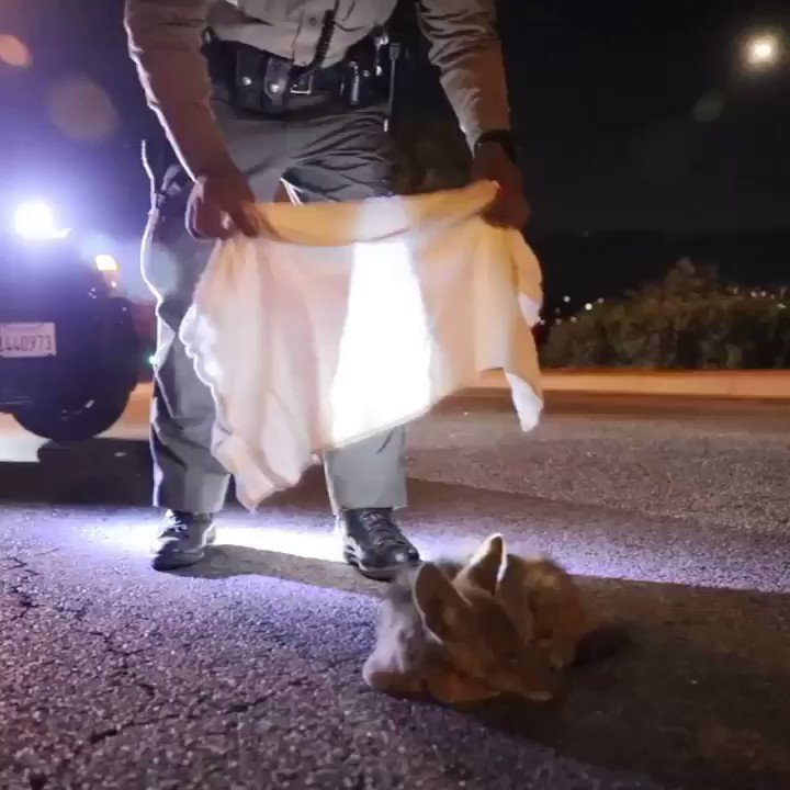 Compassion and courage are qualities of great men and women. Like this @SCVSHERIFF deputy in Los Angeles tending to a hurt coyote pup as he awaits animal care and control, our cops across the country demonstrate this every day.  #CopsCountPoliceMatter