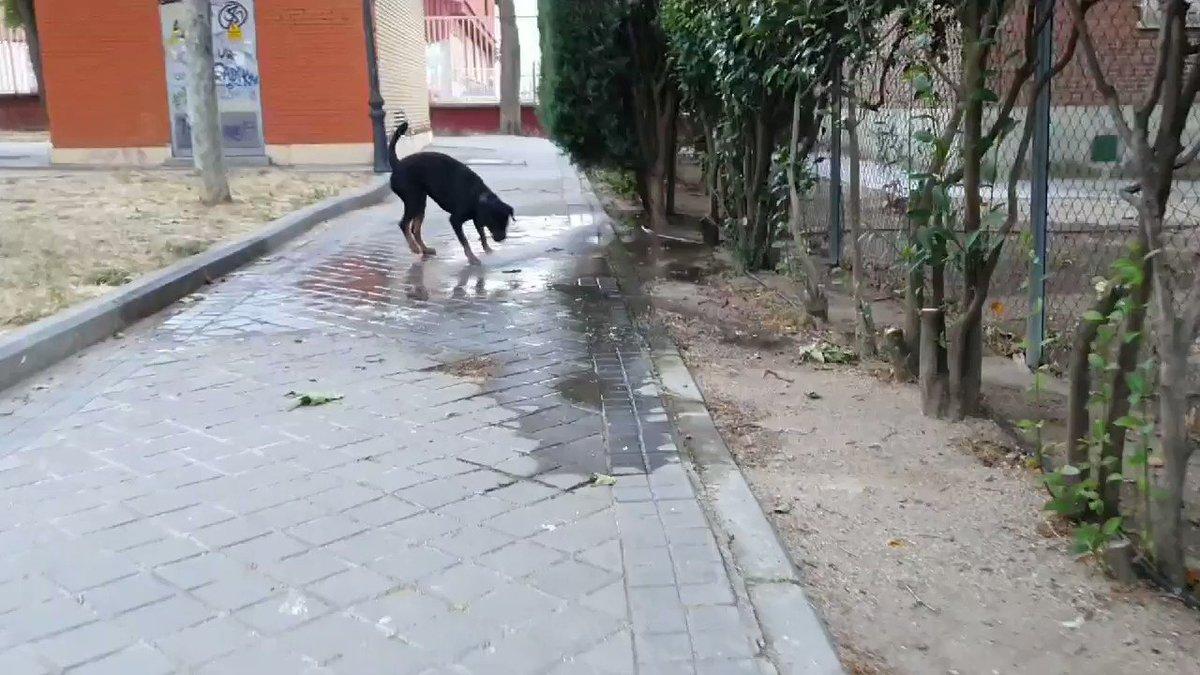 Si eso no es un momento de felicidad... #Rottweiler #summer #water #dogs #MomentosPorVivir