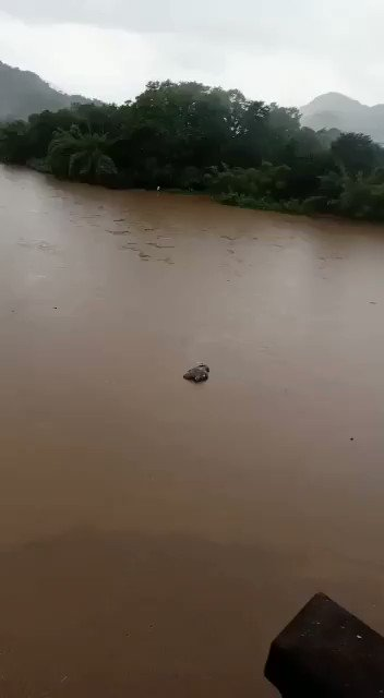 Scary visuals of a wild elephant carcass flowing down the Periyar as monsoon rains intensify in Kerala. Spotted near the Neriyamangalam bridge. @IndianExpress