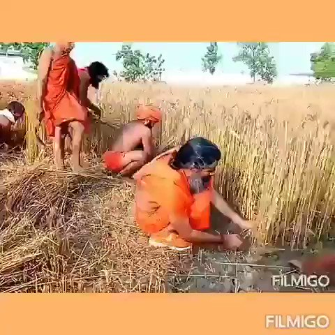 परम पूज्य @yogrishiramdev जी महाराज के आव्हान से देश की संस्कृति और प्रकृति के अनुसार मोटा अनाज का सेवन का प्रचलन बड़ा है जिससे देश का कृषि क्षेत्र आत्मनिर्भर होने की दिशा में अग्रसर हैं  #AatmaNirbharKrishi #पतंजलि  @PMOIndia