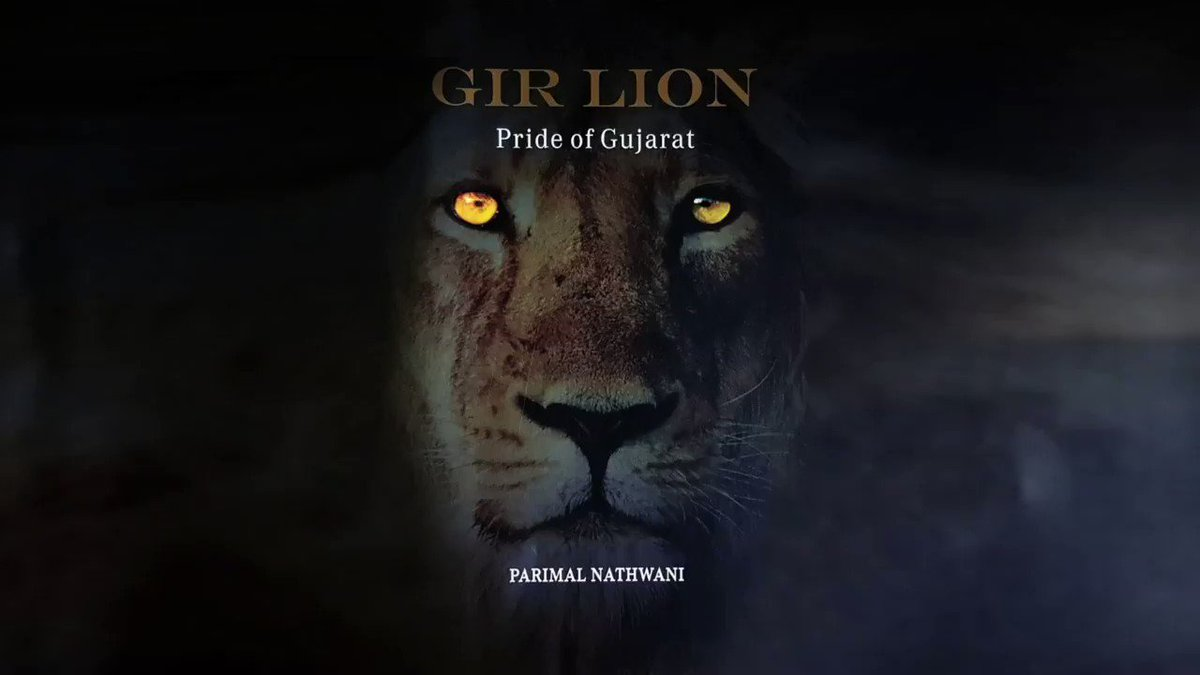 On #WorldLionDay2020, sharing a video from launch of my book- Gir Lions, Pride of Gujarat. Inspired by my passion for #AsiaticLions, this book collates my experiences in #Gir Forest. You can get your copy on- Amazon:  Flipkart: