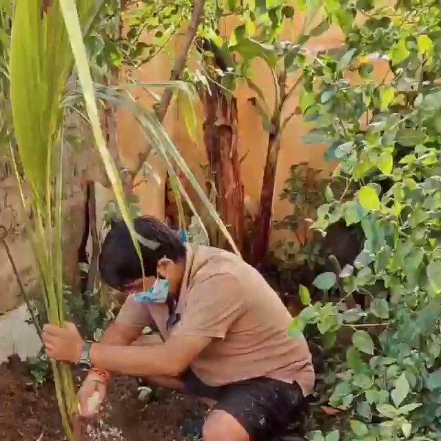 आज प्रधानमंत्री श्री @narendramodi जी के जन्मदिन पर अपने घर में नारियल का पेड़ लगाया....ईश्वर आपको भारत वर्ष को दुनियाँ का सर्वश्रेष्ठ राष्ट्र बनाने के लिये दीर्घायु, स्वास्थ एवं सम्बल प्रदान करे... 🚩जय श्री राम🚩 🚩राम राज🚩 #vijayvyas