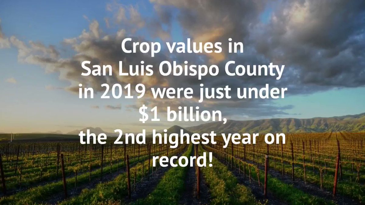 San Luis Obispo County 2019 Crop Statistics Released: San Luis Obispo County Agriculture Reports 2nd Highest Value Year on Record. Can you guess the #1 crop without watching the video? #WeAreSLOCounty #Food