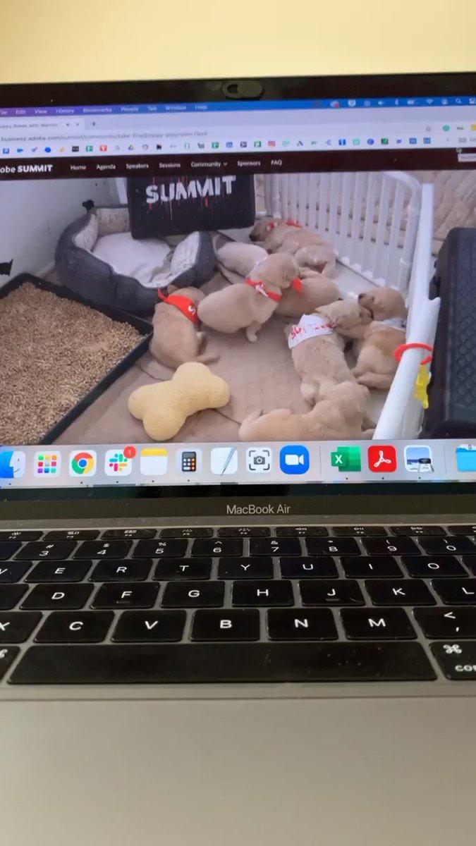 CAROhallman: The best part of @AdobeSummit? The puppy playroom. Thank you @shann_abel for sharing! #AdobeSummit https://t.co/LwgZ9UzY38