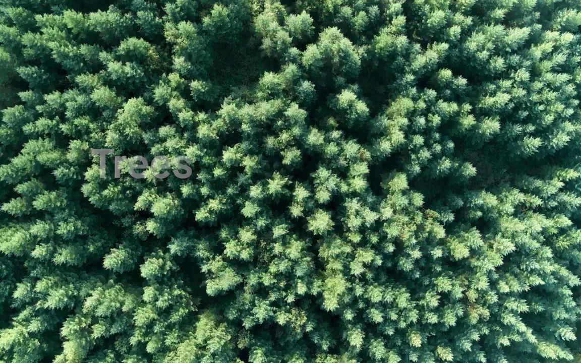 Introducing Forust -- building a greener future through 3D printed wood https://t.co/XYz9Iej4BN