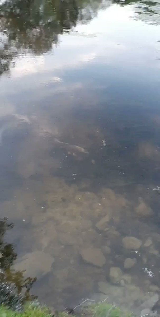 Put The Rods Away They Decide To Come Out...#Carp #Fishing #carpfishing https://t.co/lci0FcFaN9