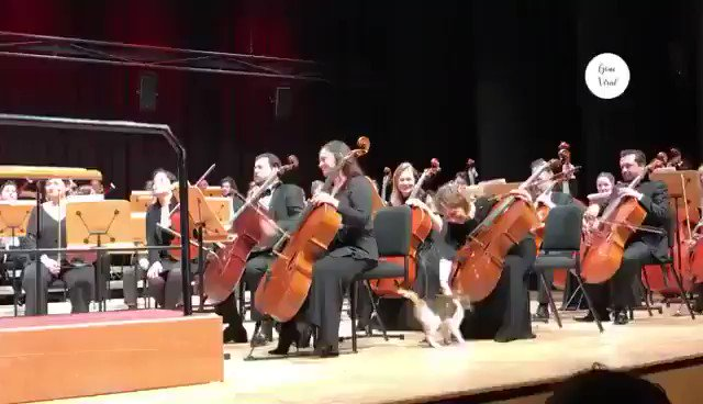 Cat stealing the show.. 😂  #repost https://t.co/ER8kPoYmNg