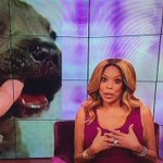 So talk show host @WendyWilliams named her dog after me, LOL! #ShaquilleONealHunter http://t.co/PzC9dr8zjT