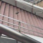 鳩様が歩いて階段降りてたからエスカレーターを使ってるの申し訳なくなった https://t.co/UWzhHYL97l