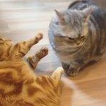 短足バトル pic.twitter.com/Iyz6NQbC6Z