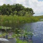 hTeCorpsNetwork: RT hamletgarcia17: On our way to #MiamiBeach #Miami we stopped at the Florida #Everglades looki… http://t.co/NqHkkzq4R1