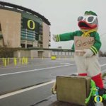 One Duck, many looks. @TheOregonDuck #TransformationTuesday #Ootd #GoDucks http://t.co/gpB059IMLA