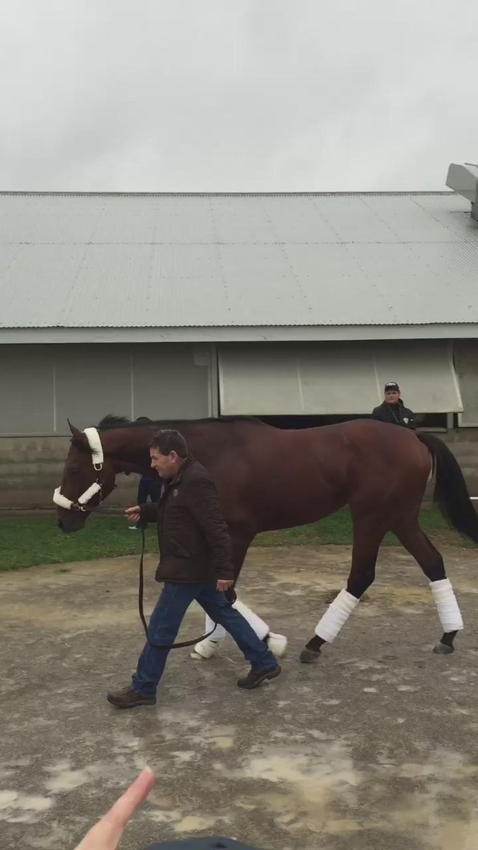 Here's the video of American Pharoah arriving at Keeneland @BreedersCup #BC15 https://t.co/1Vg9vcVx7L