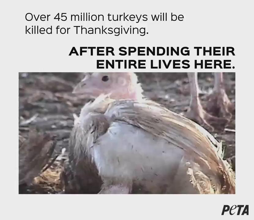 RT @peta: 45 million turkeys had to live like this & be killed just for #Thanksgiving. https://t.co/9eZLbWHH4U