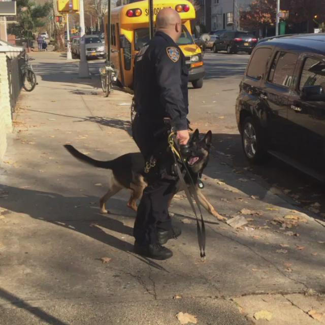 Check out @k9timoshenko well trained and super precise. @NYPDnews @NYPDSpecialops #NYPD #K9 https://t.co/PJkx9UHK7B