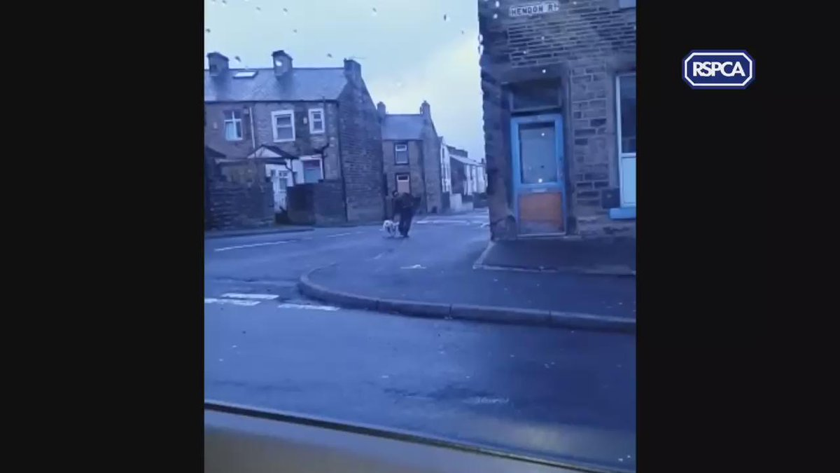 A man in Nelson has been filmed repeatedly punching a dog. Do you have info? Call @RSPCA_official on 0300 123 8018. https://t.co/eKIuMJNTMn