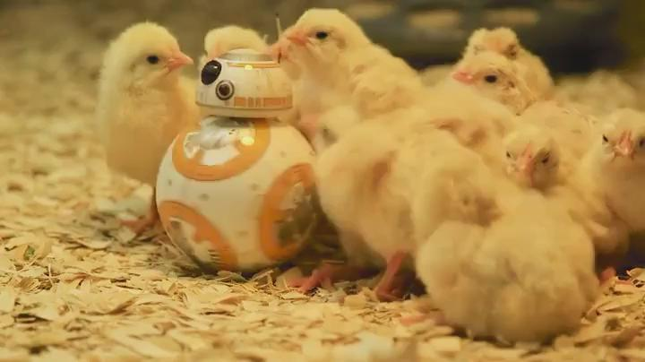 BB-8 is popular with all the chicks   https://t.co/CsNVERaAIG