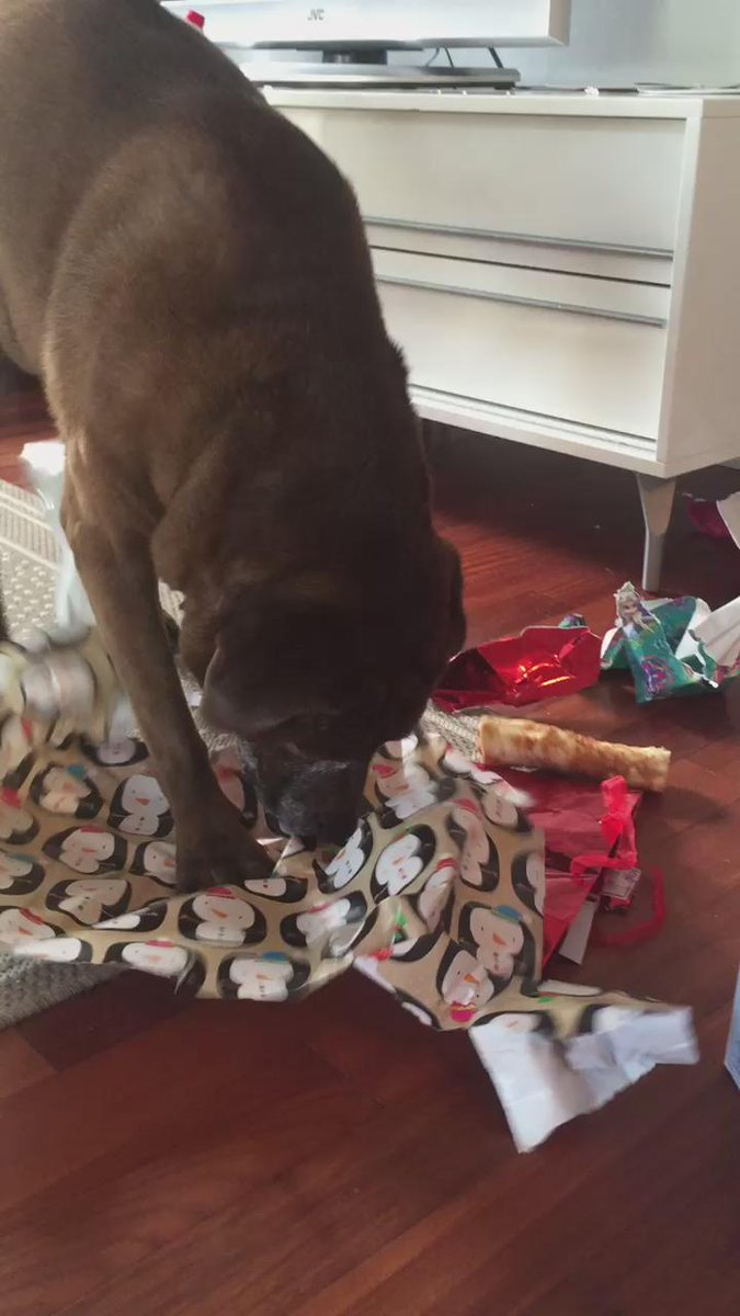 Our official gift opener #PetsUnwrappingPresents https://t.co/PVAsuv6aDl